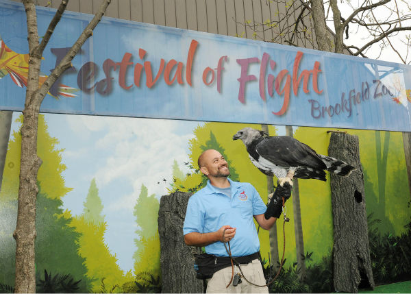 "<div class=""meta image-caption""><div class=""origin-logo origin-image none""><span>none</span></div><span class=""caption-text"">The harpy eagle is one of the birds featured at the Festival of Flight bird show from May 23 through September 7. (Courtesy of Brookfield Zoo)</span></div>"