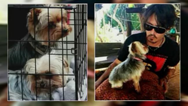 721913_051415-ktrk-depps-dogs-new-img.jp