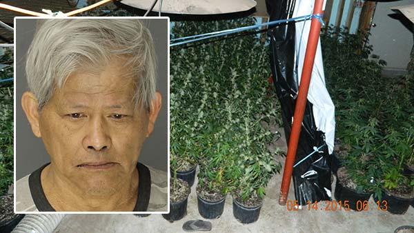 70-year-old man charged in marijuana grow operation