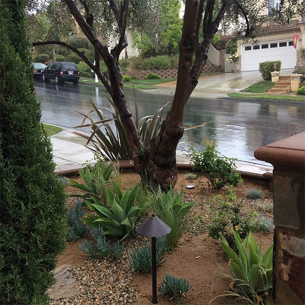 """<div class=""""meta image-caption""""><div class=""""origin-logo origin-image none""""><span>none</span></div><span class=""""caption-text"""">ABC7 viewer Janet shared this photo on Instagram of her drought-friendly yard getting soaked in Mission Viejo. (KABC Photo/Janet)</span></div>"""