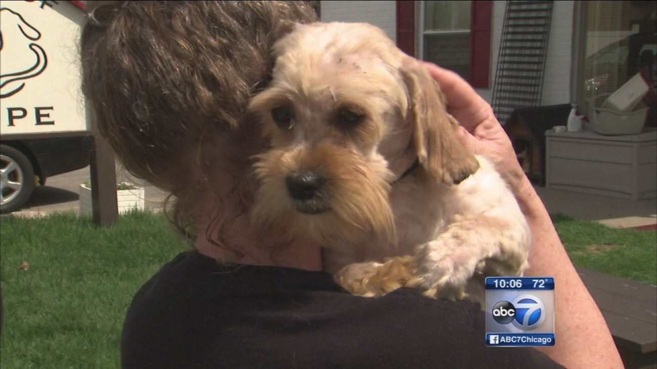 Dozens of neglected dogs removed from Glencoe house