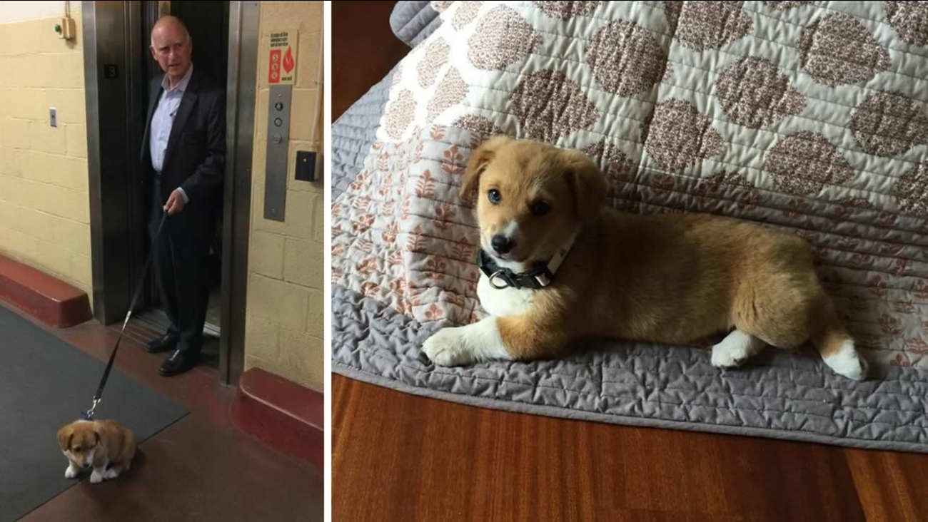 """California's new Deputy First Dog is Colusa """"Lucy"""" Brown."""