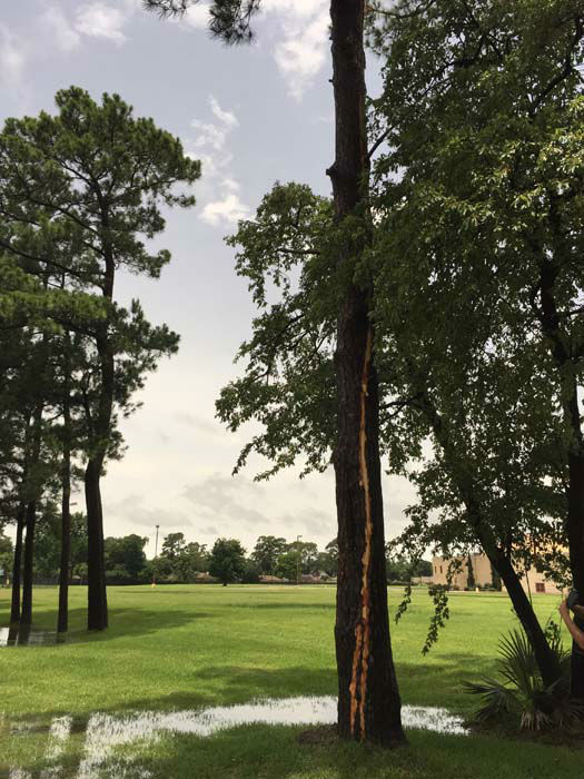 """<div class=""""meta image-caption""""><div class=""""origin-logo origin-image none""""><span>none</span></div><span class=""""caption-text"""">A tree struck by lightning is scarred up its entire side. The tree is between Ella and Shepherd. (KTRK Photo/Jason Farias)</span></div>"""