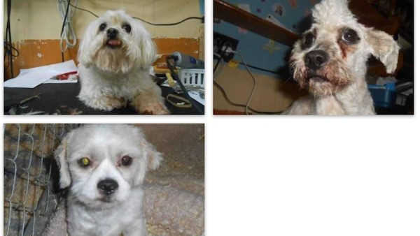 4 dogs stolen
