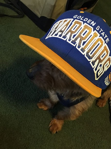 <div class='meta'><div class='origin-logo' data-origin='none'></div><span class='caption-text' data-credit=''>This little Warriors pooch is ready for Game 3! Tag your photos on Facebook, Twitter, Google Plus or Instagram using #DubsOn7.Photo sent to KGO-TV by tashface41/Instagram</span></div>