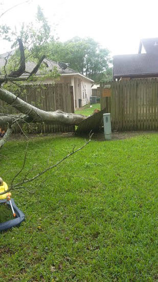 """<div class=""""meta image-caption""""><div class=""""origin-logo origin-image none""""><span>none</span></div><span class=""""caption-text"""">The early morning storms sent this tree through a fence (Photo/iWitness Reports)</span></div>"""