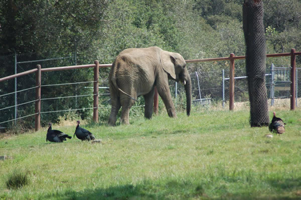 "<div class=""meta image-caption""><div class=""origin-logo origin-image ""><span></span></div><span class=""caption-text"">The Zoo is home to four African elephants named Donna, Lisa, M'Dunda, and Osh. (Gina Kinzley, Senior Elephant Keeper)</span></div>"