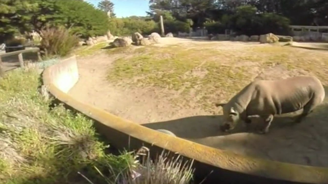The San Francisco Zoo wants to build a special feeding device for its rhinos, called a foobler. But it needs to raise money for the project.