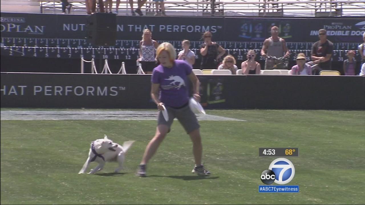 Purina incredible dog challenge prizes to win