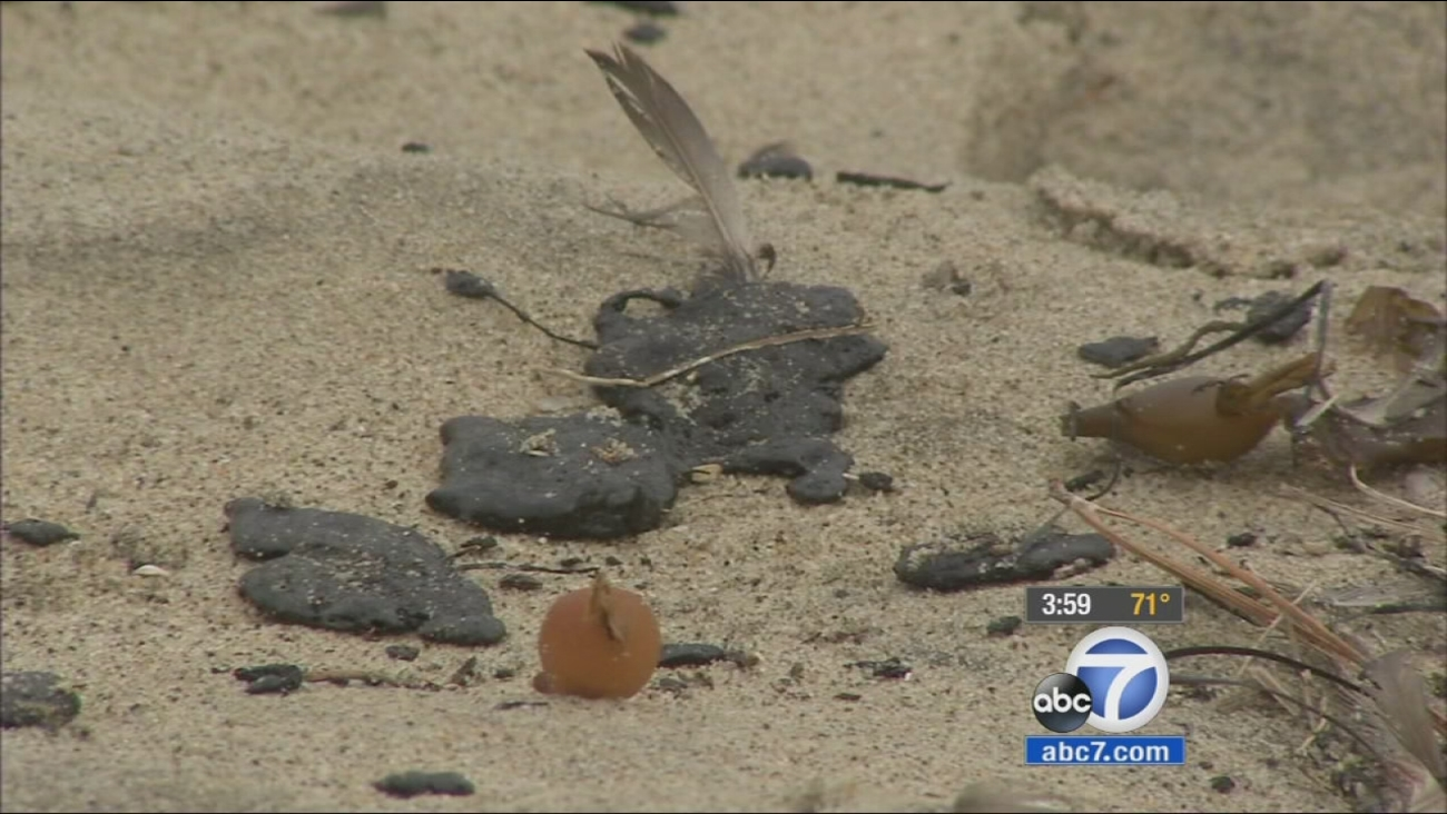 Tar balls are seen in the sand in Manhattan Beach on Friday, May 29, 2015.