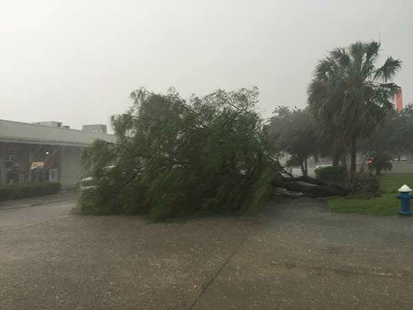 """<div class=""""meta image-caption""""><div class=""""origin-logo origin-image none""""><span>none</span></div><span class=""""caption-text"""">A tree fell on Portsmouth and Sandman.  If you have photos, email them to news@abc13.com or upload them using #abc13eyewitness (Kevin Quinn/Photo)</span></div>"""