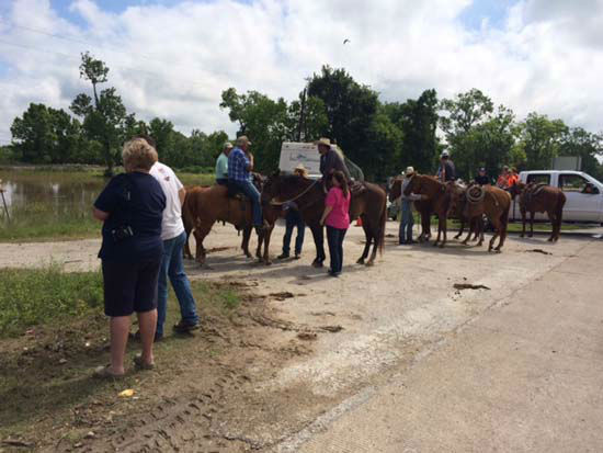 """<div class=""""meta image-caption""""><div class=""""origin-logo origin-image none""""><span>none</span></div><span class=""""caption-text"""">Cowboys are driving cattle from the flooded area near the Trinity River to higher ground (KTRK Photo/ Rudy Montano)</span></div>"""