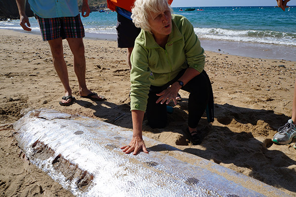 "<div class=""meta image-caption""><div class=""origin-logo origin-image none""><span>none</span></div><span class=""caption-text"">A dead oarfish was found floating in the waters off of Santa Catalina Island's Sandy Beach on Monday, June 1, 2015. (Photo courtesy Mountain and Sea Educational Adventures)</span></div>"