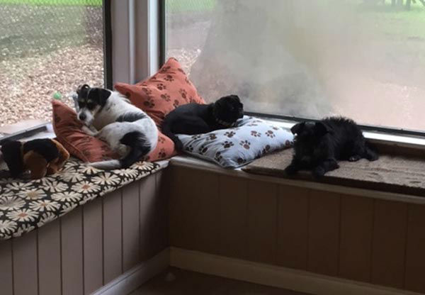 """<div class=""""meta image-caption""""><div class=""""origin-logo origin-image none""""><span>none</span></div><span class=""""caption-text"""">Here are some of the animals that have been helped recently by The Ruff House</span></div>"""