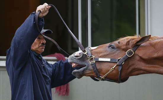 """<div class=""""meta image-caption""""><div class=""""origin-logo origin-image none""""><span>none</span></div><span class=""""caption-text"""">Belmont Stakes entrant Madefromlucky plays with a groom during a bath after working out at Belmont Park (AP Photo/ Julie Jacobson)</span></div>"""