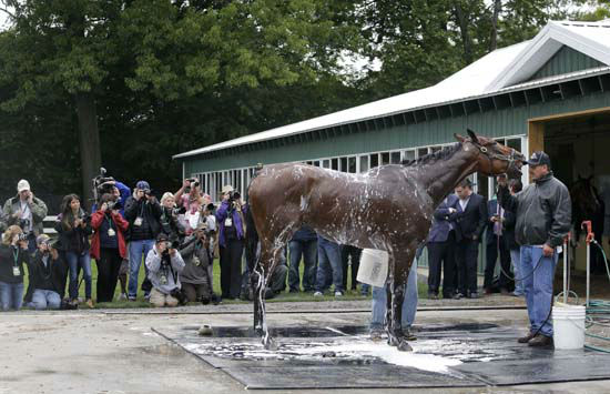 "<div class=""meta image-caption""><div class=""origin-logo origin-image none""><span>none</span></div><span class=""caption-text"">Kentucky Derby and Preakness Stakes winner American Pharoah gets a bath (AP Photo/ Julie Jacobson)</span></div>"