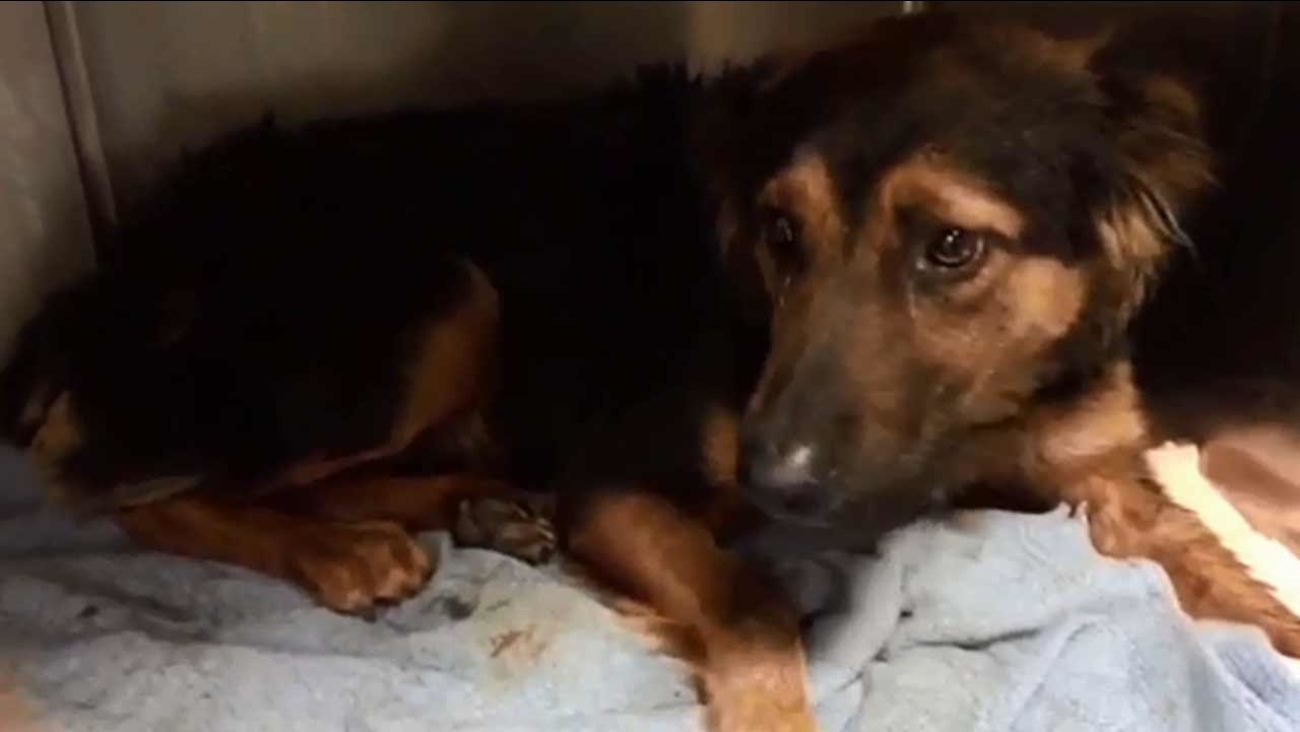 A nonprofit organization is offering a $1,000 reward for information that leads to the arrest of the suspect who constricted a dog's neck with a shoelace in Riverside County.