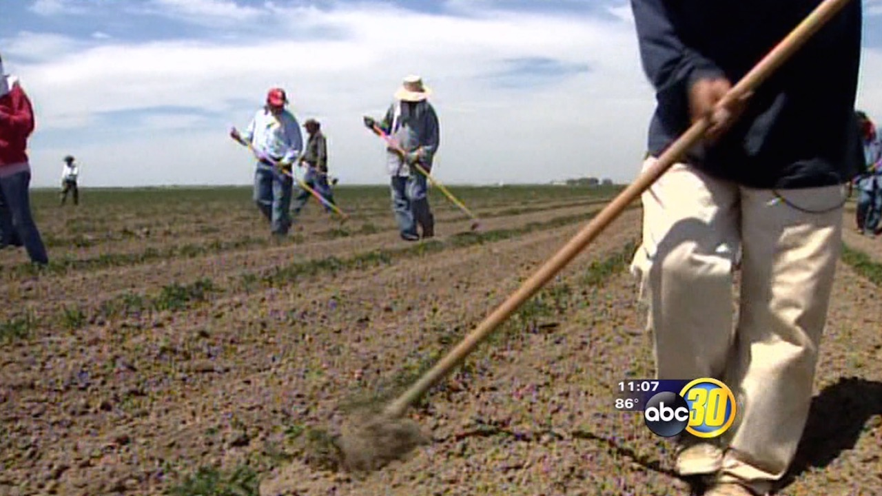California drought to cost 18,000 farm jobs, $1.2 billion in lost wages, officials say
