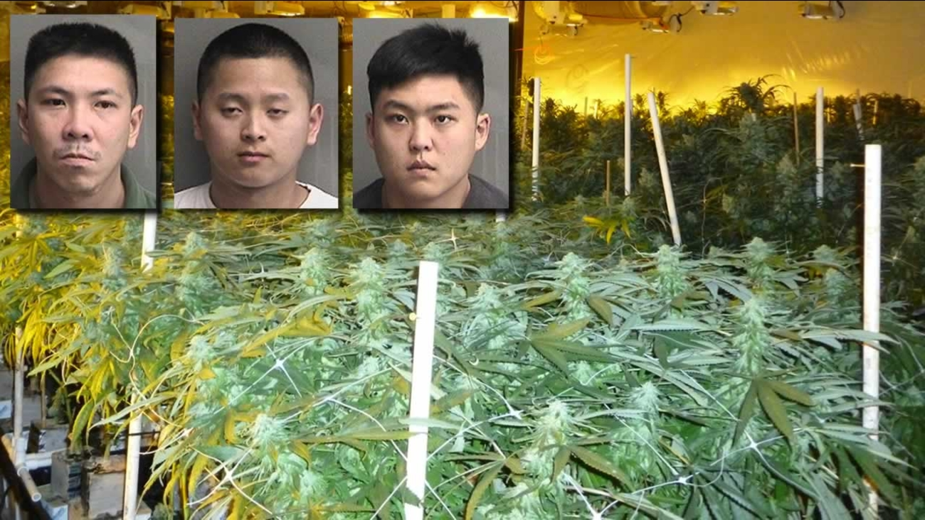 Authorities arrested three men at the scene of a massive marijuana factory in Hayward last week. They have been charged with felony marijuana cultivation and sales.