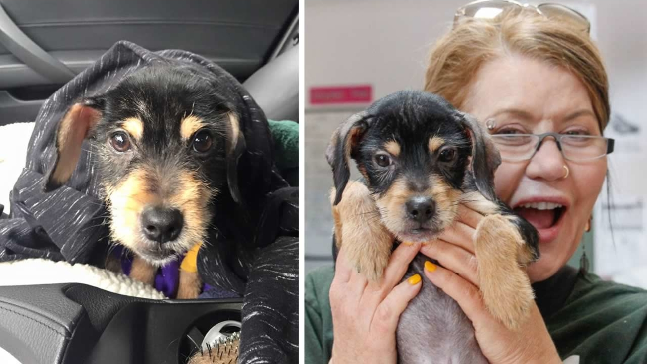 Oakland Animal Services in Oakland, Calif. is seeking donations for a puppy named Frodo who contracted parvovirus, a potentially fatal infection of the intestinal  tract.