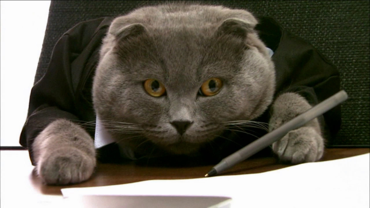 A startup company in Romania has hired a cat as their new communications manager.