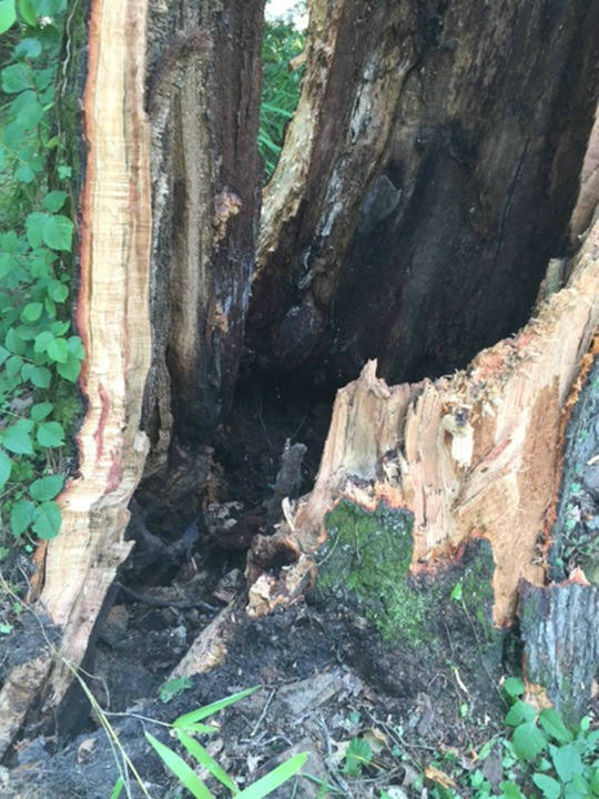 "<div class=""meta image-caption""><div class=""origin-logo origin-image none""><span>none</span></div><span class=""caption-text"">Crews worked for hours to cut up the massive tree. (WTVD Photo/ Tamara Gibbs)</span></div>"