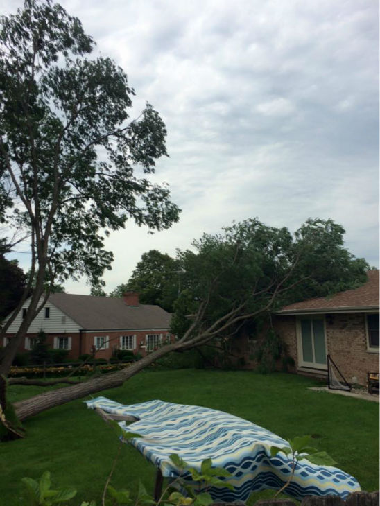 """<div class=""""meta image-caption""""><div class=""""origin-logo origin-image none""""><span>none</span></div><span class=""""caption-text"""">Tree falls on home in Joliet, Ill. Shared by Philip Gray. (WLS Photo)</span></div>"""