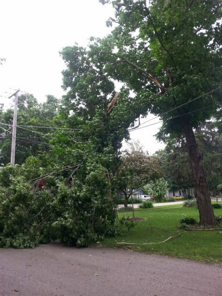 """<div class=""""meta image-caption""""><div class=""""origin-logo origin-image none""""><span>none</span></div><span class=""""caption-text"""">Tree falls on power lines in Yorkville, Ill. Shared by Michelle Palleson. (WLS Photo)</span></div>"""
