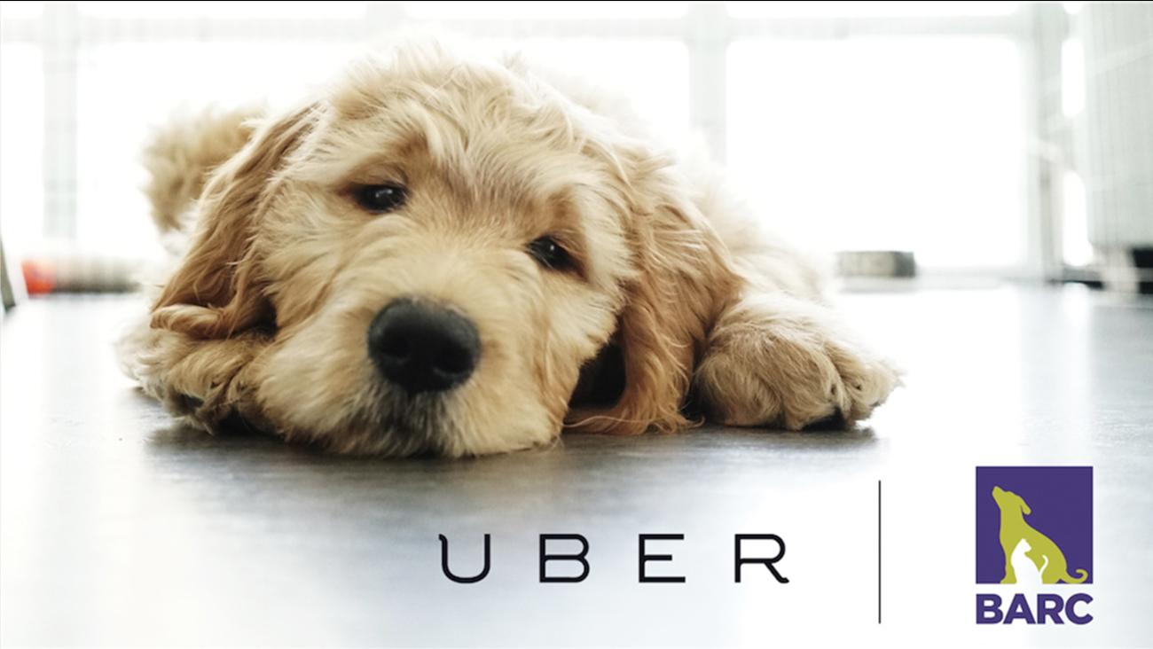 Uber and BARC
