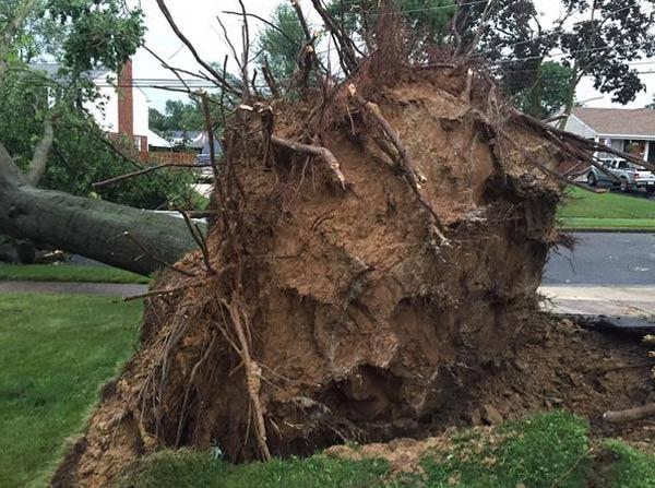 "<div class=""meta image-caption""><div class=""origin-logo origin-image none""><span>none</span></div><span class=""caption-text"">Dann Cuellar: One massive tree down on school lane in Brookhaven</span></div>"