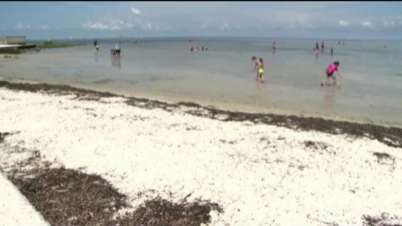 Man dies of flesh-eating bacteria after swimming at Pine