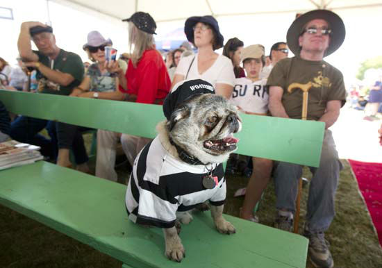 "<div class=""meta image-caption""><div class=""origin-logo origin-image none""><span>none</span></div><span class=""caption-text"">Grovie, a pug, waits to compete in the World's Ugliest Dog Contest at the Sonoma-Marin Fair in Petaluma, CA (AP Photo/Noah Berger)</span></div>"