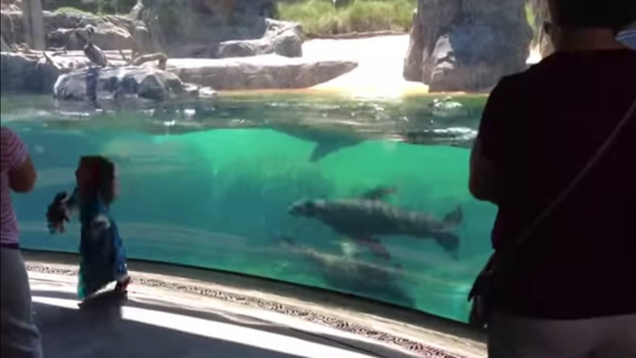 8a16d722d VIRAL VIDEO OF THE DAY: Sea lion shows concern when little girl ...