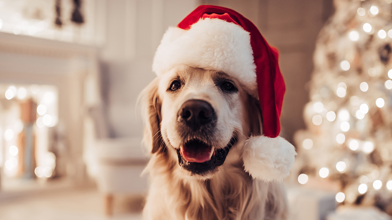Bark, the herald angels sing! A 'first ever' Christmas song for dogs has been released