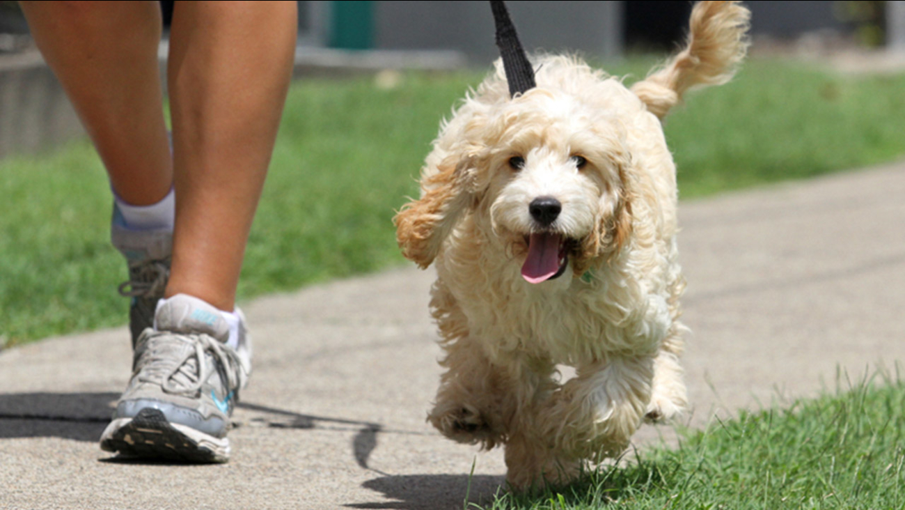 5 Second Trick To Tell If Its Too Hot To Walk Your Dog