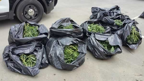 A Caltrans crew made an unexpected discovery in the East Bay. They recovered eight large bags of marijuana plants along Highway 4 in Antioch on Thursday, July 2, 2015.