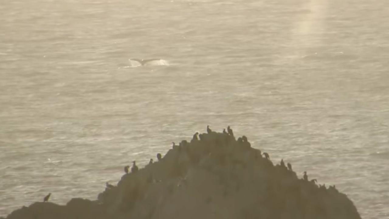 Two whales were seen along Ocean Beach in San Francisco on July 6, 2015.