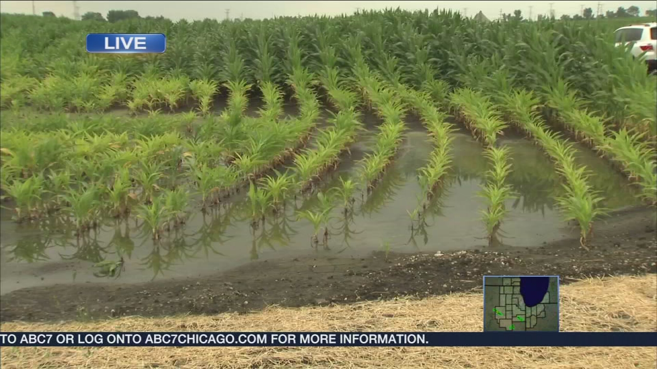 Wet summer leaves Illinois farmers under water