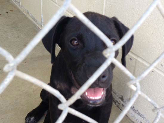 """<div class=""""meta image-caption""""><div class=""""origin-logo origin-image none""""><span>none</span></div><span class=""""caption-text"""">Stray dogs in Fort Bend County are finding new homes in the Midwest rather than being euthanized. (KTRK Photo/ Fort Bend County Animal Services/Saving Our Companion Animals-Fort Bend County)</span></div>"""
