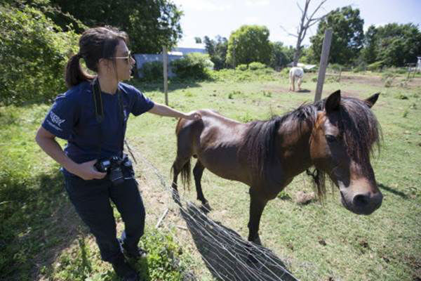 """<div class=""""meta image-caption""""><div class=""""origin-logo origin-image none""""><span>none</span></div><span class=""""caption-text"""">Ashley Mauceri, senior manager of animal crimes for the HSUS, touches a horse during the Humane Society of the United States animal rescue in Pittsboro, N.C.. (Chris Keane/AP Images for The Humane Society)</span></div>"""