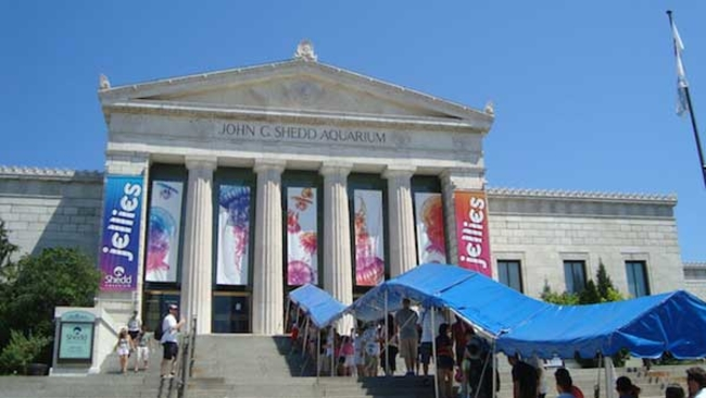 shedd aquarium in chicago among tripadvisor s top 10 in us