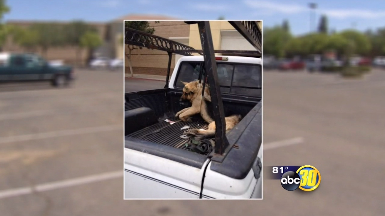 Refugio Alvarez was charged with a felony, after his dog was found hanging in the bed of his truck at a local Pet Smart.