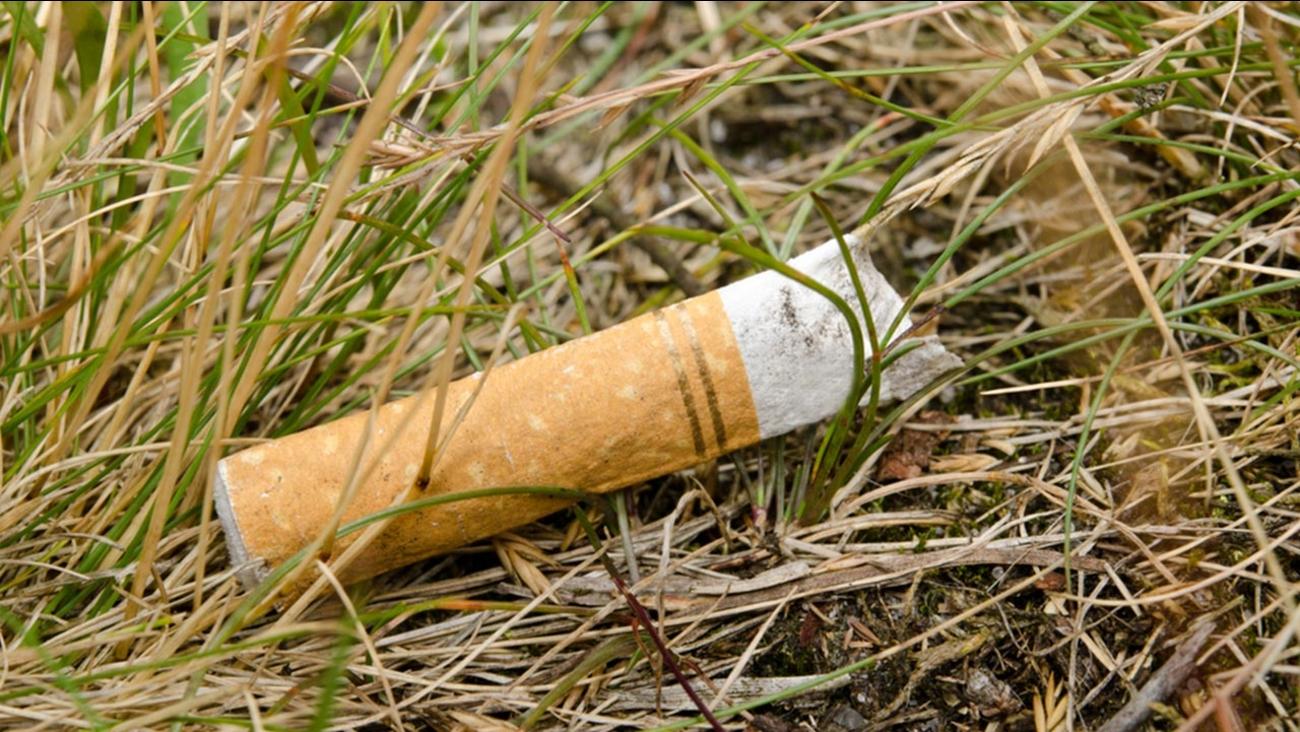 Cigarette butt in grass
