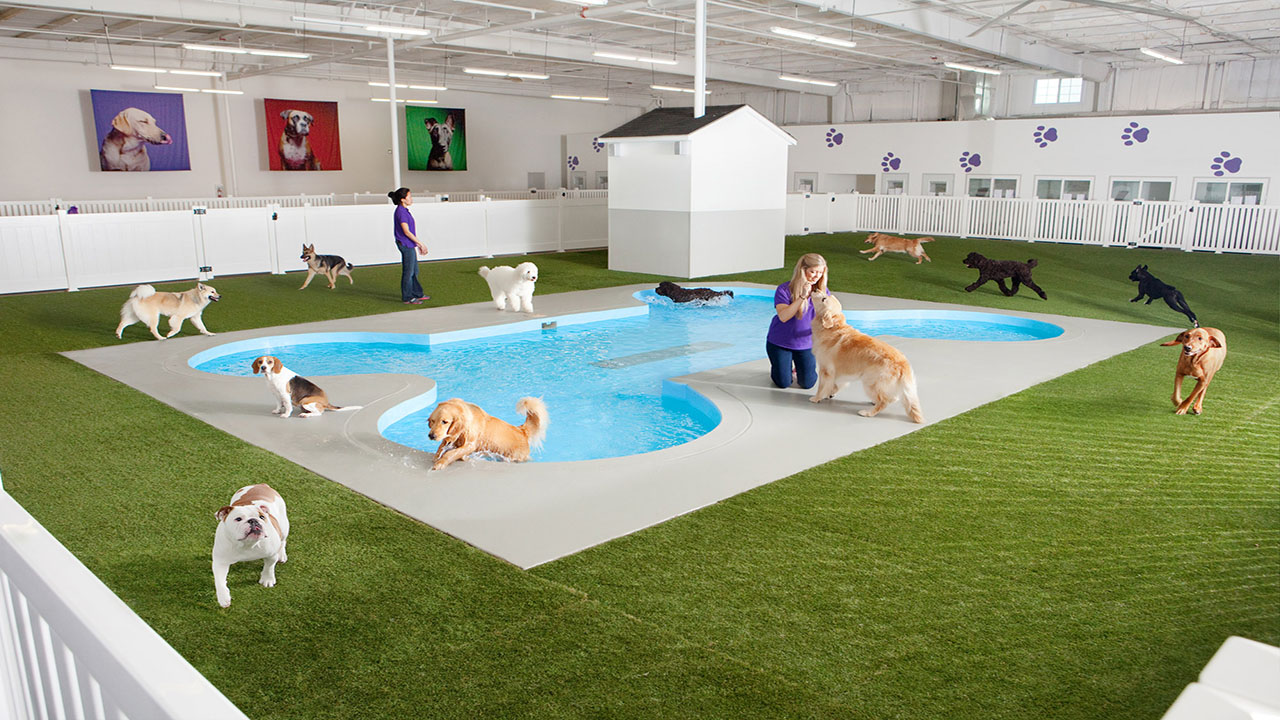 Artist rendering of Paradise 4 Paws, a holding area for dogs in a new luxury terminal at New York's John F. Kennedy International Airport