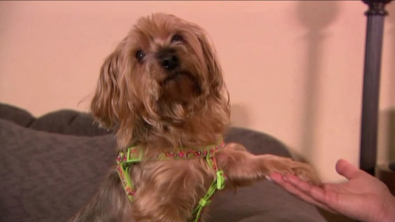 A woman in Texas recognized her dog in an ad seven months after it disappeared.