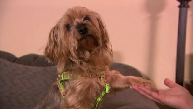 Popular Scam Steals Dogs Puts Them Up For Sale On Craigslist