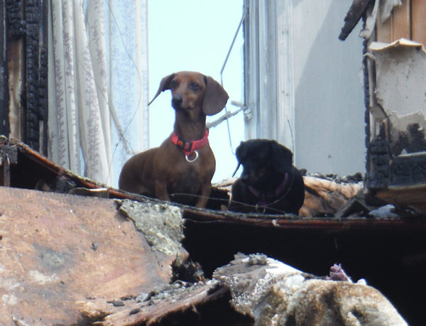 """<div class=""""meta image-caption""""><div class=""""origin-logo origin-image none""""><span>none</span></div><span class=""""caption-text"""">Firefighters rescued two dogs who were believed to have perished during a fire in Chester County.</span></div>"""