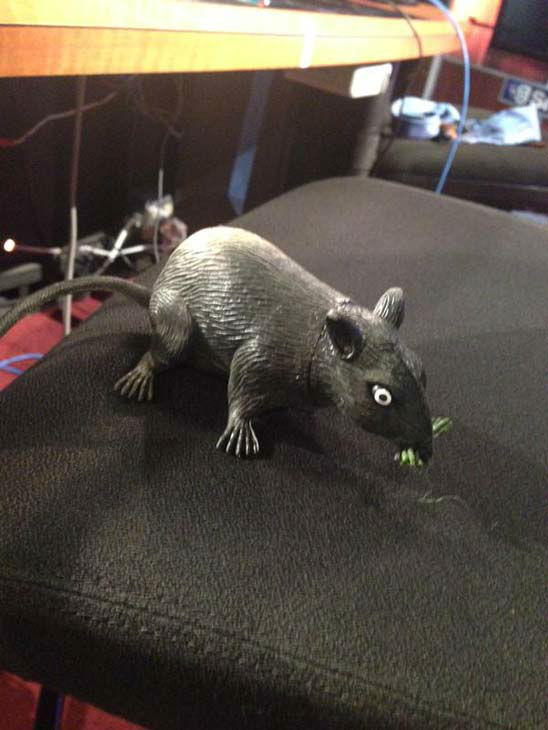 """<div class=""""meta image-caption""""><div class=""""origin-logo origin-image none""""><span>none</span></div><span class=""""caption-text"""">Chauncy scared Elissa with this toy rat by putting it on the anchor desk (KTRK Photo)</span></div>"""