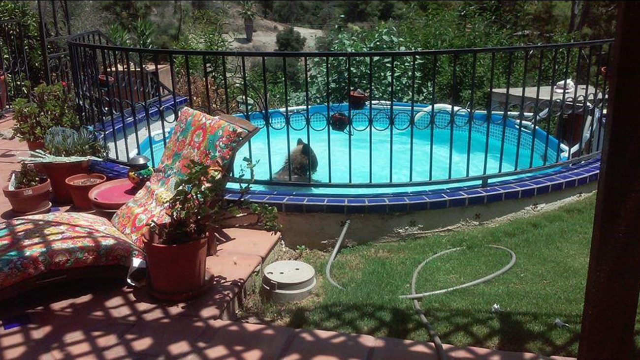 A bear took an afternoon dip in a Monrovia pool on Monday, July 27, 2015.