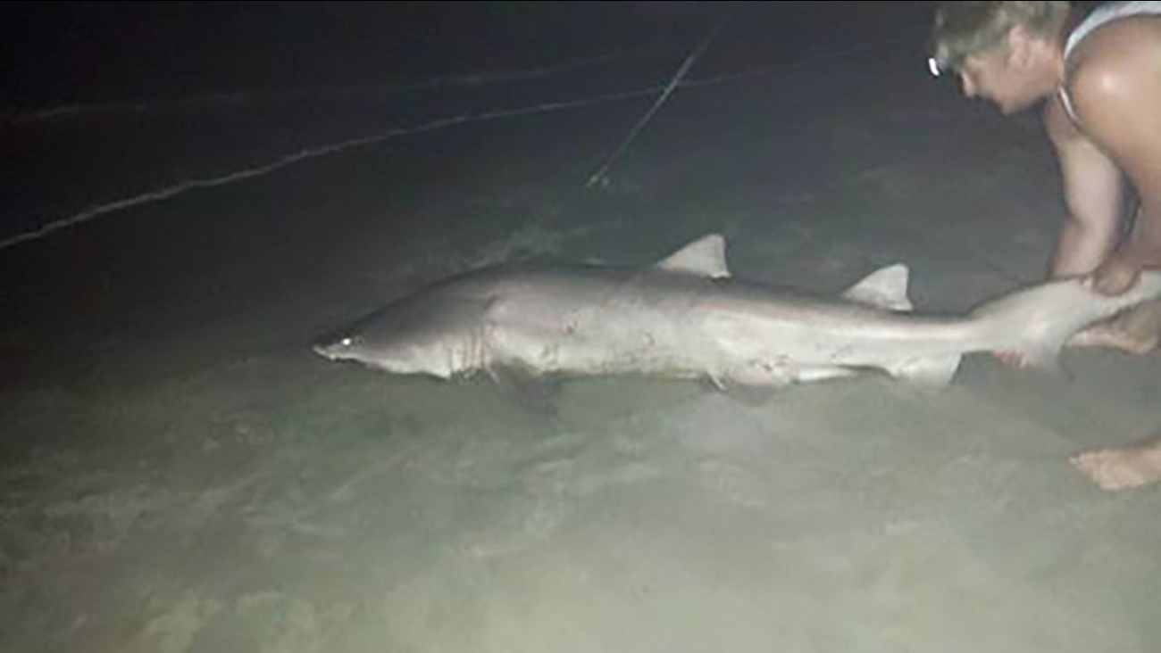 Big Shark Caught Off Outer Banks In North Carolina Abc7 New York